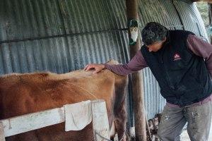 Rick milking Susie