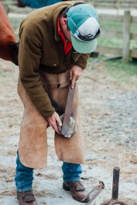 Damien shoeing one of his horses