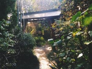 Ingrid's garden